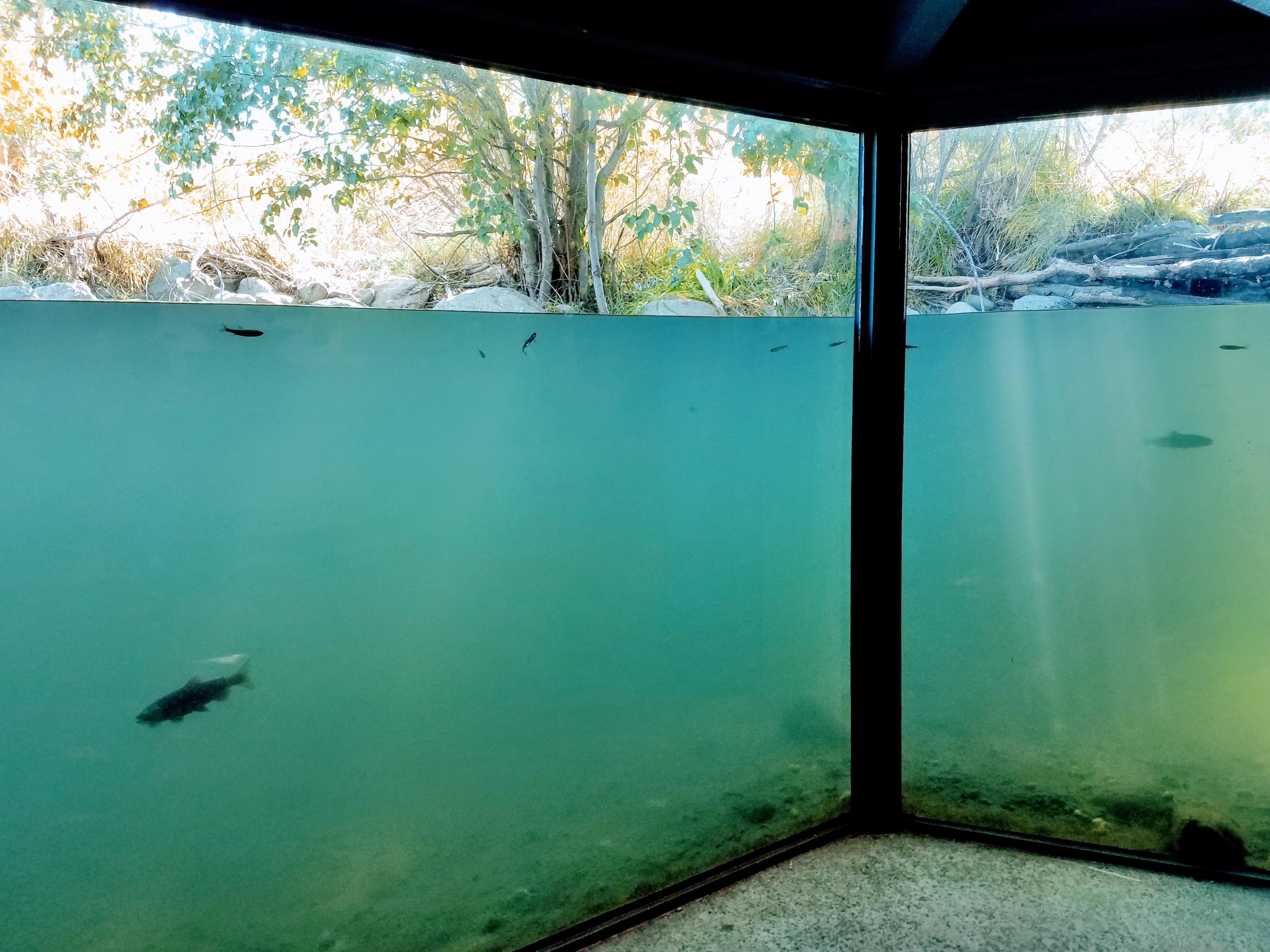 Taylor Creek Chamber