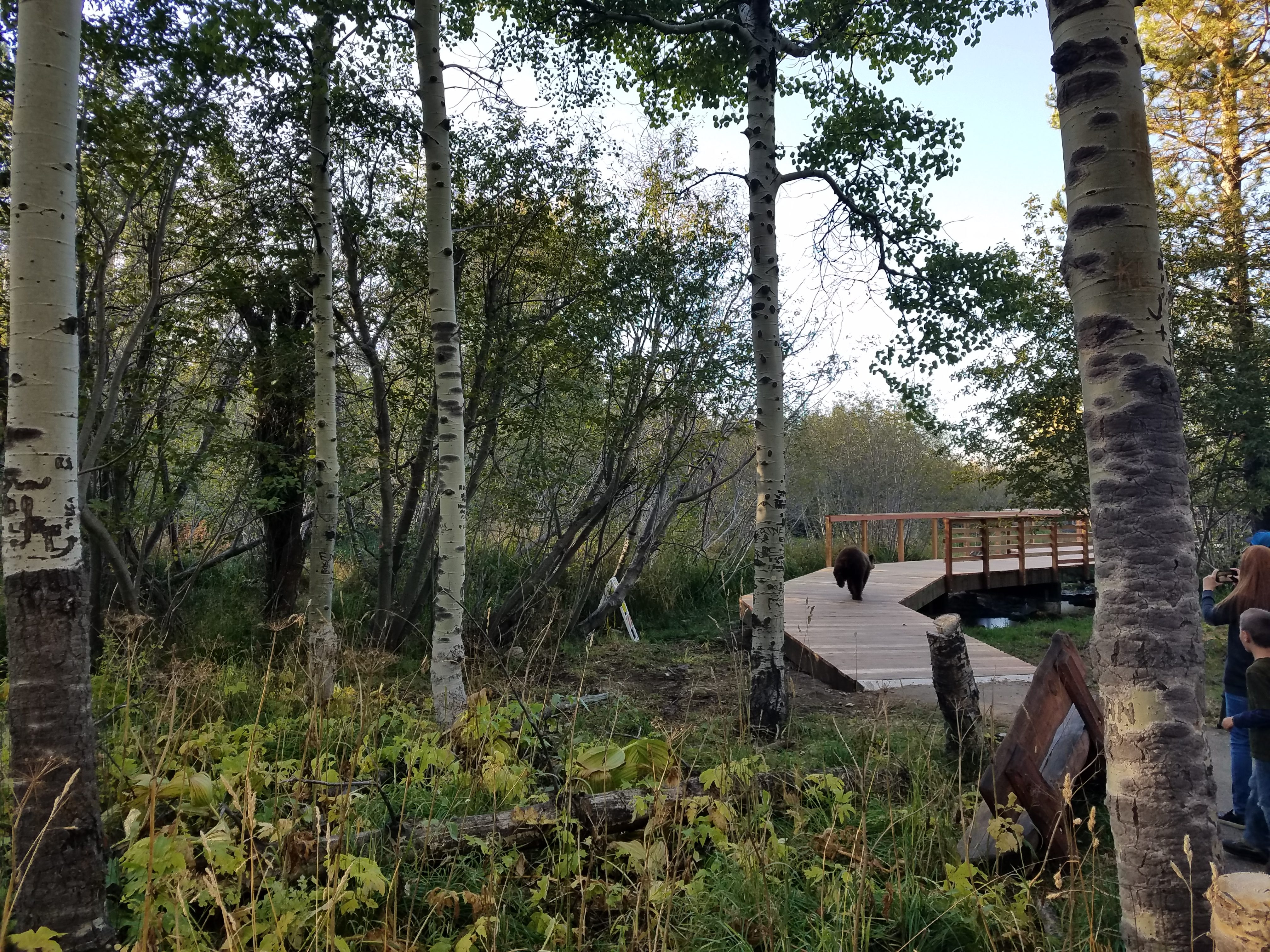 Bear Taylor Creek